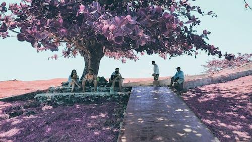 Ilmainen kuvapankkikuva tunnisteilla infrapuna, infrapuna-valokuvaus, kesä, kukkiva puu