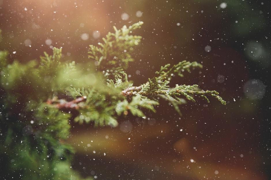advent, blur, branch
