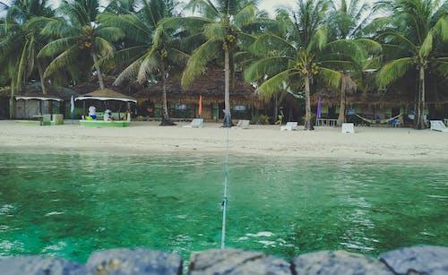 리조트, 바다, 야자수, 여름의 무료 스톡 사진