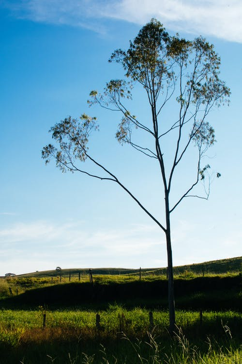 Δωρεάν στοκ φωτογραφιών με αγροτικός, γήπεδο, δέντρο, εξοχή