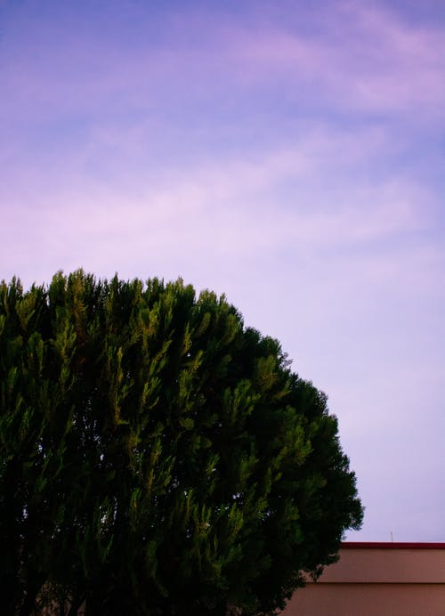 Tree under the sky