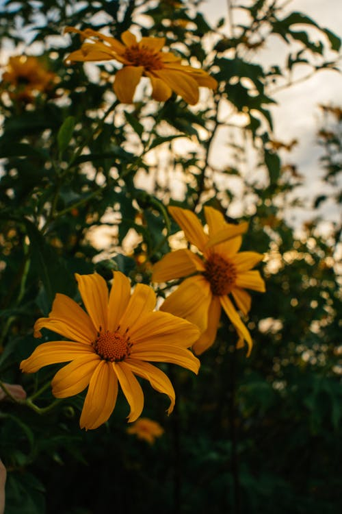 Yellow Petaled Flower Plants