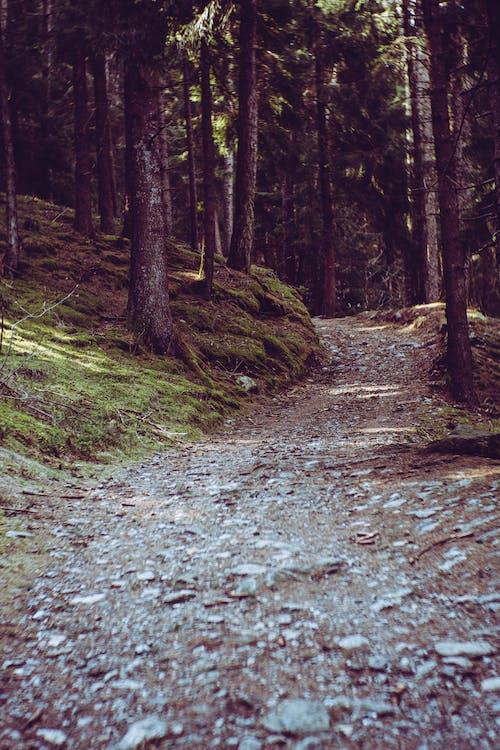 natur, skog, sti