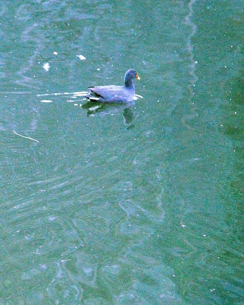 Základová fotografie zdarma na téma čeření, pádlo, řeka, vodní ptactvo