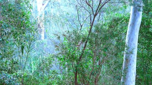 Základová fotografie zdarma na téma gumový strom, keř, les, listy