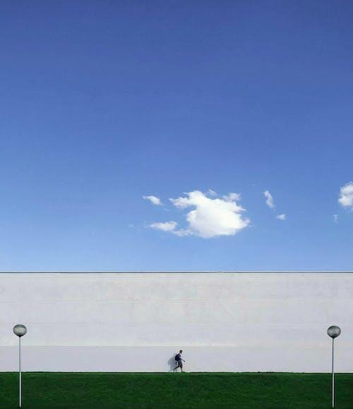 Fotos de stock gratuitas de al aire libre, alto, brillante, campo