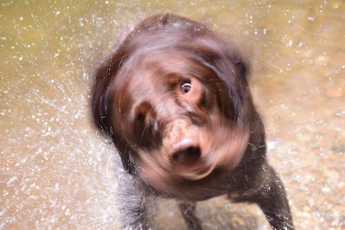 小屋, 抖動, 水, 狗 的 免費圖庫相片