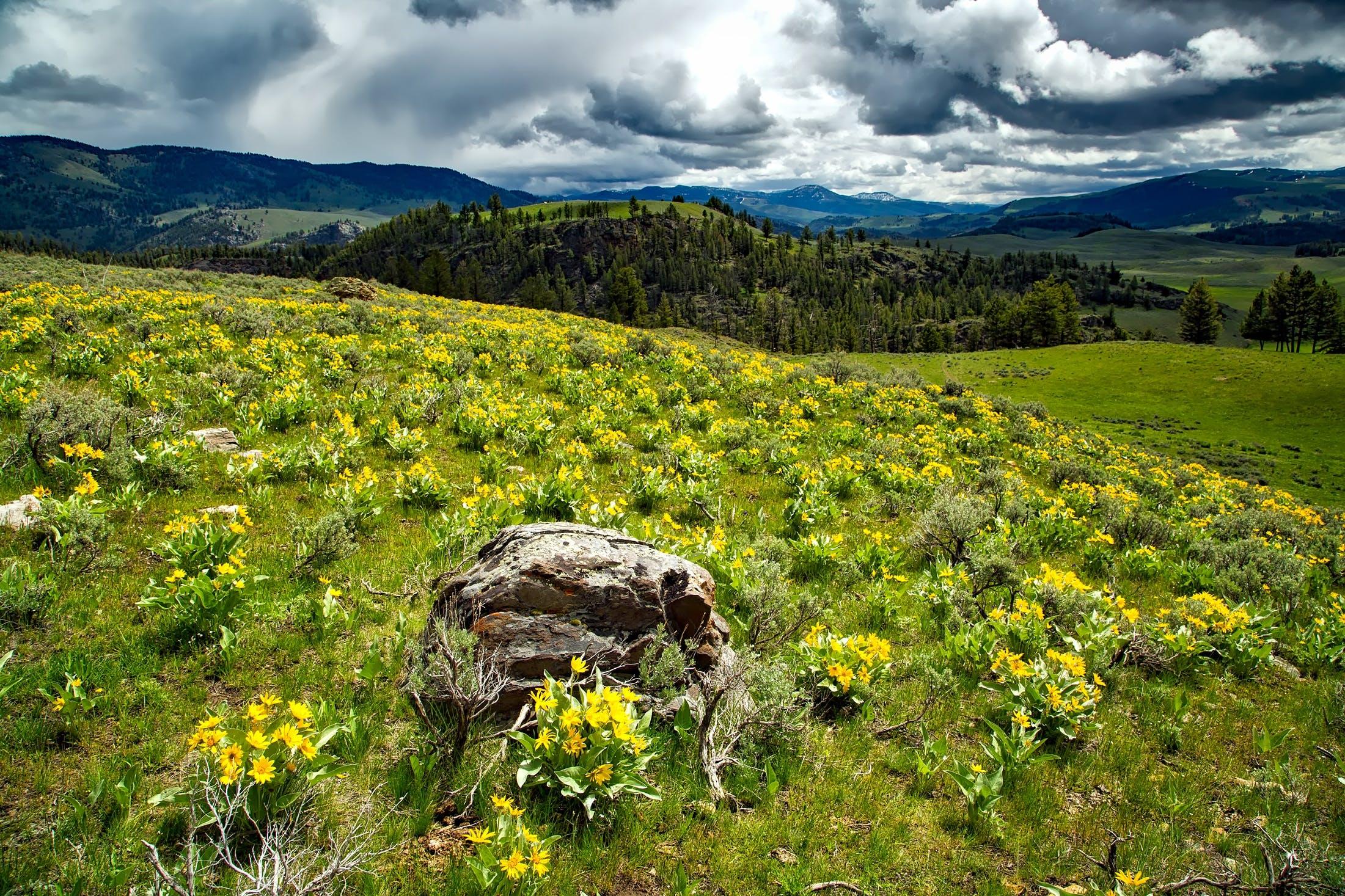 clouds, field, flora