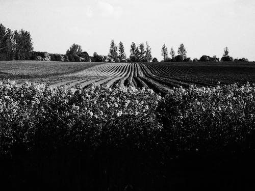 Fotobanka sbezplatnými fotkami na tému čierna a biela