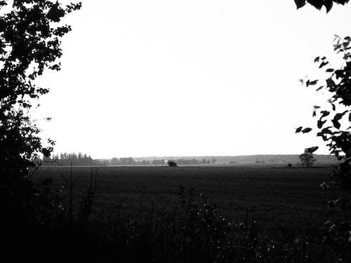 Gratis stockfoto met zwart en wit