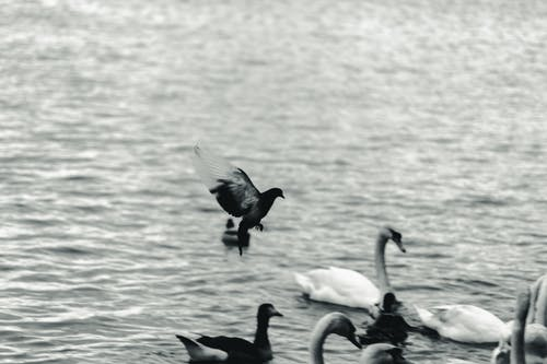 Grayscale Photography Of Birds
