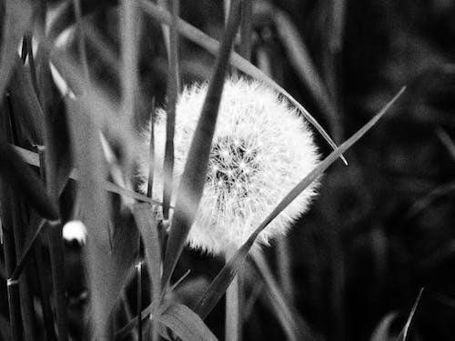 Gratis stockfoto met gevoel, kunstbloemen, mooie bloem, mooie bloemen