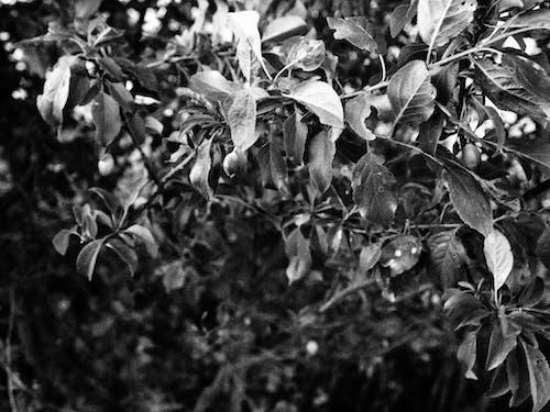 Fotobanka sbezplatnými fotkami na tému čierna a biela, krásny kvet, nádherné kvety, pocit