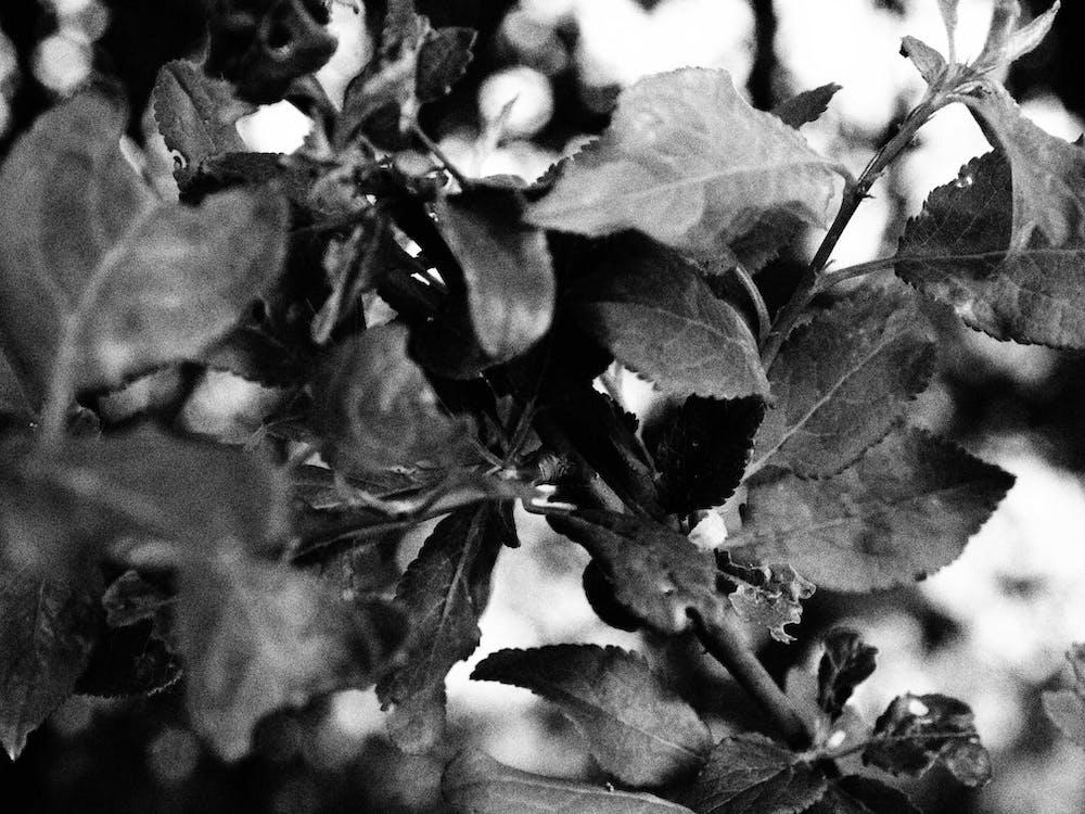 čierna a biela, čiernobiely, krásny kvet