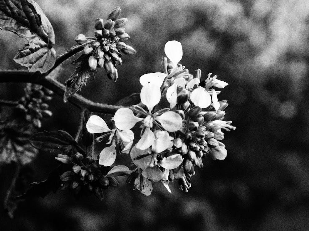 アートフラワー, 感じ, 白黒