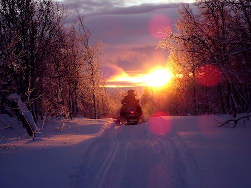 Immagine gratuita di alba, alberi, freddo, gatto delle nevi