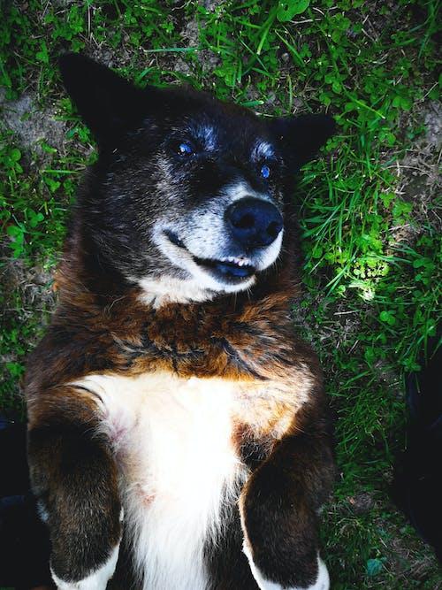 Безкоштовне стокове фото на тему «#oldbuthappy, #найкращий друг»