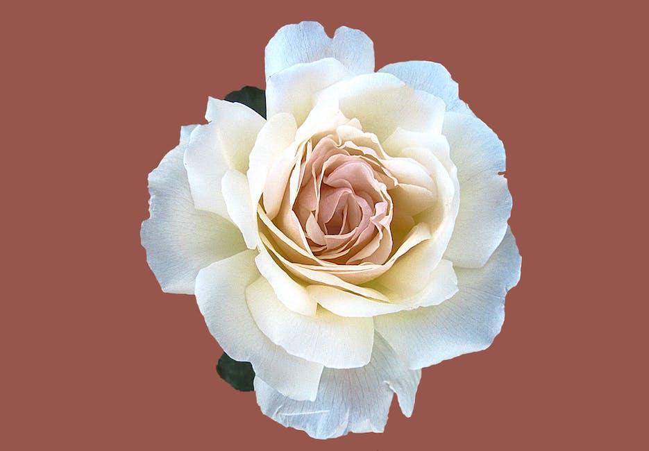 Bloom blossom flora flower