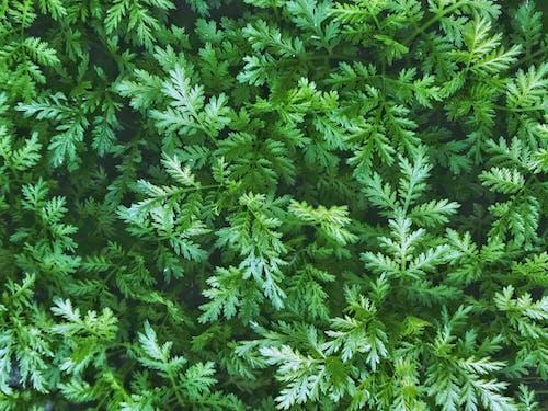 Fotobanka sbezplatnými fotkami na tému listy, papraď, rastlina, zelená