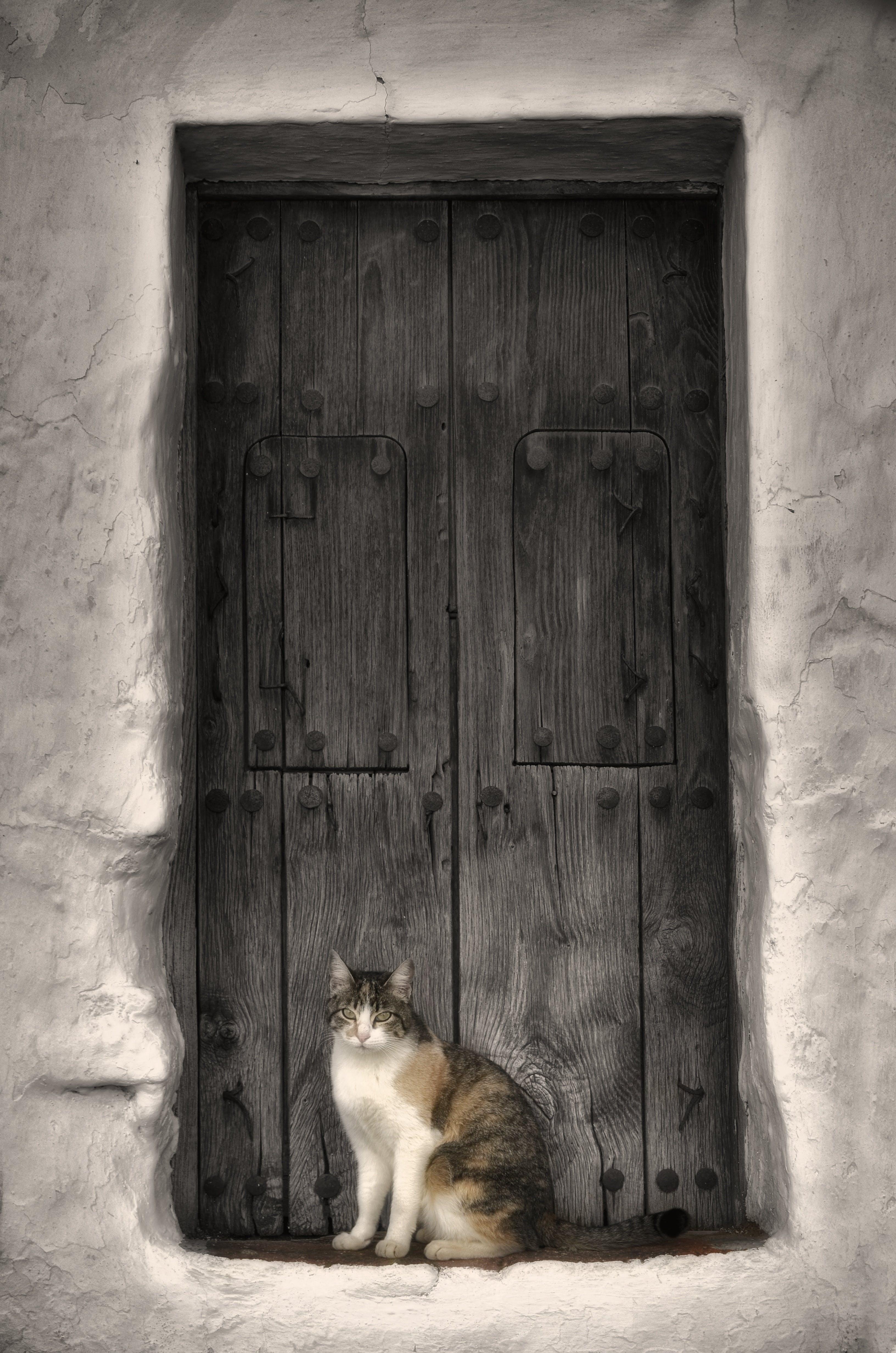 クラシック, ドア, ネコ, ビンテージの無料の写真素材