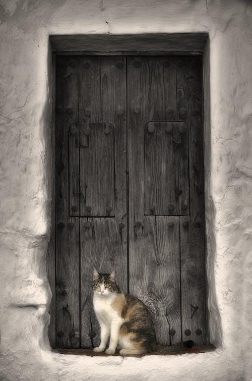 Imagine de stoc gratuită din abandonat, clasic, intrare, lemn