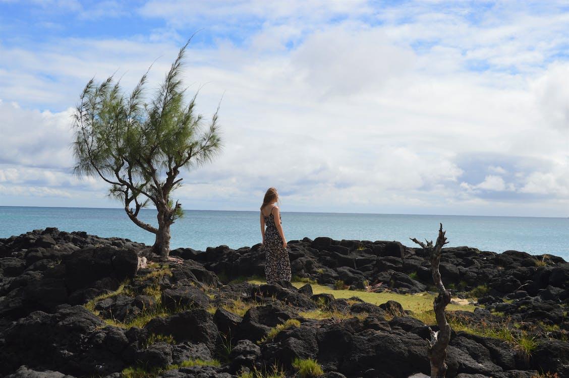 nähdä, puu, saari