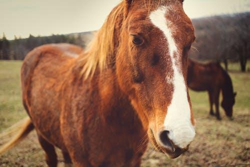 Free stock photo of animal, horse, landscape