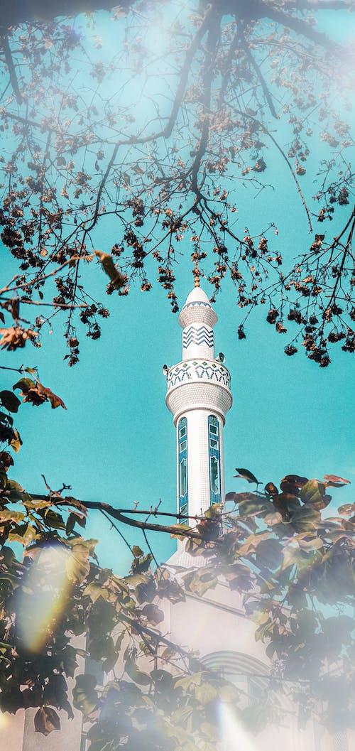 Fotobanka sbezplatnými fotkami na tému mešita, modrá obloha, strom