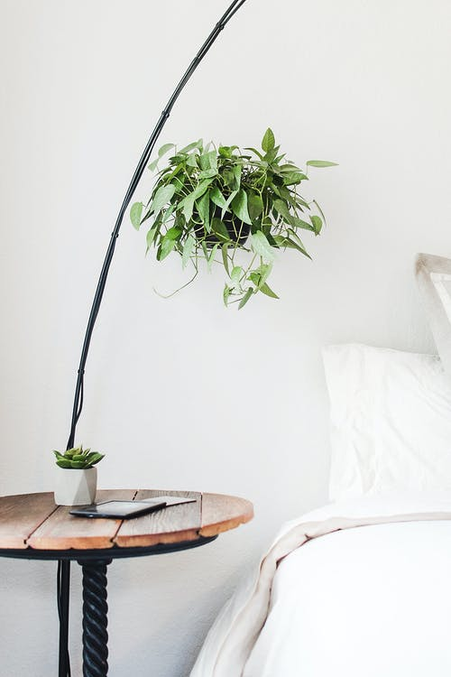 bitkiler, dekor, fabrikalar, iç mekan içeren Ücretsiz stok fotoğraf