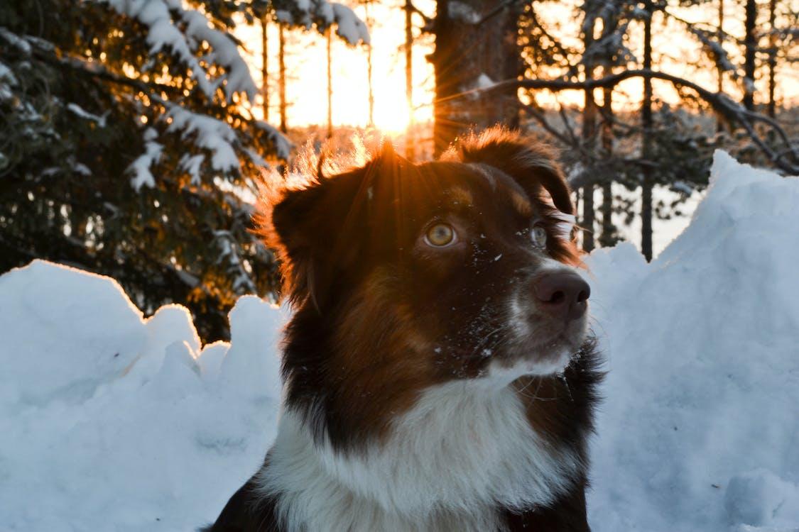 Medium-coated Black-and-white Dog Near Snow