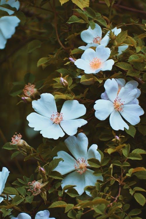 Foto stok gratis berkembang, bunga-bunga, Daun-daun, flora