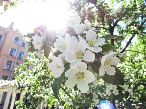 Free stock photo of flowers, garden, spring, sunshine