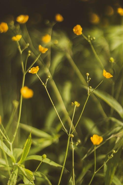 Ảnh lưu trữ miễn phí về cánh đồng, cây, cỏ, hệ thực vật