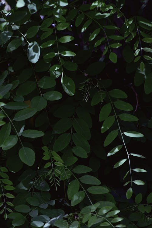açık hava, ağaç, Bahçe, bitki içeren Ücretsiz stok fotoğraf
