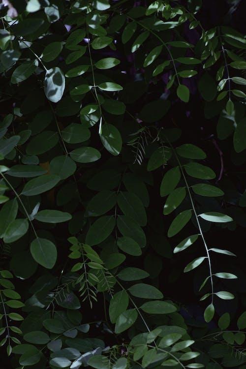 Základová fotografie zdarma na téma barva, krásný, listy, rostlina