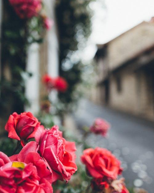 Immagine gratuita di bellissimo, colore, crescita, esterno