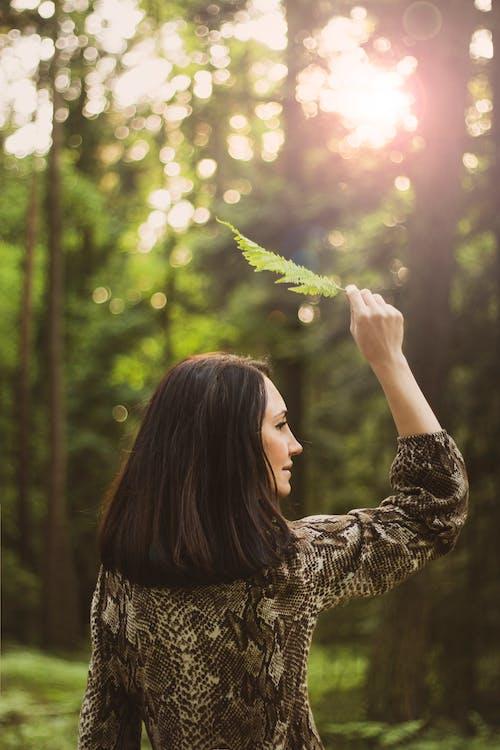 갈색 머리, 고사리 잎, 눈 부신 태양, 뒷모습의 무료 스톡 사진