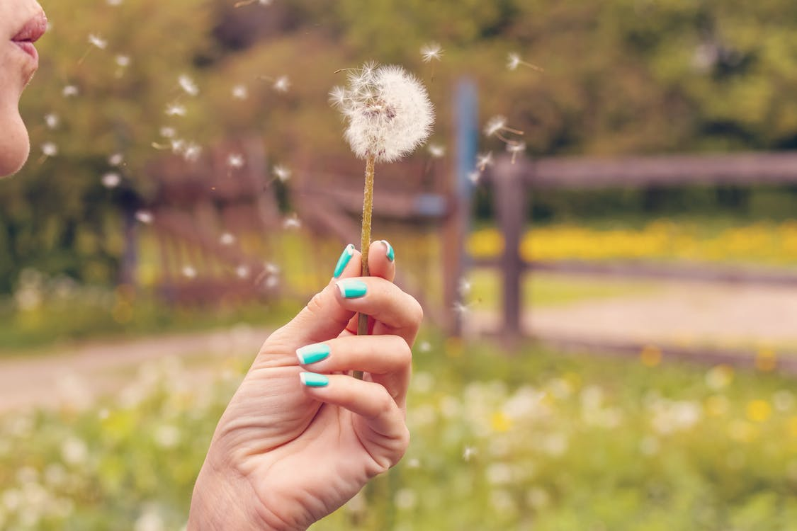 Person Blowing Dandelion, seeds flying through the air