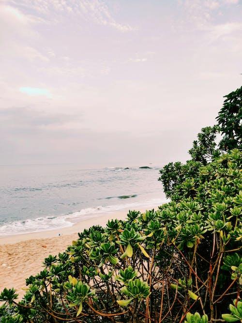Gratis lagerfoto af bølger, dagslys, hav, havudsigt