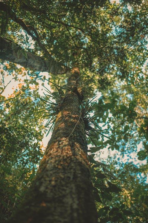 Immagine gratuita di abbaiare, alberi, ambiente, autunno