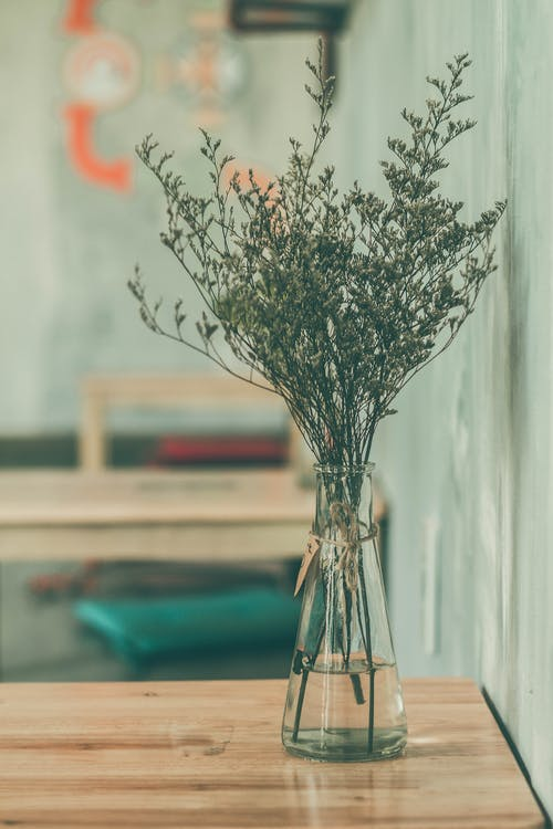 Green Plant in Clear Vase