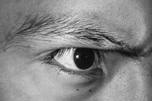 失礼な, 白黒, 眼の無料の写真素材