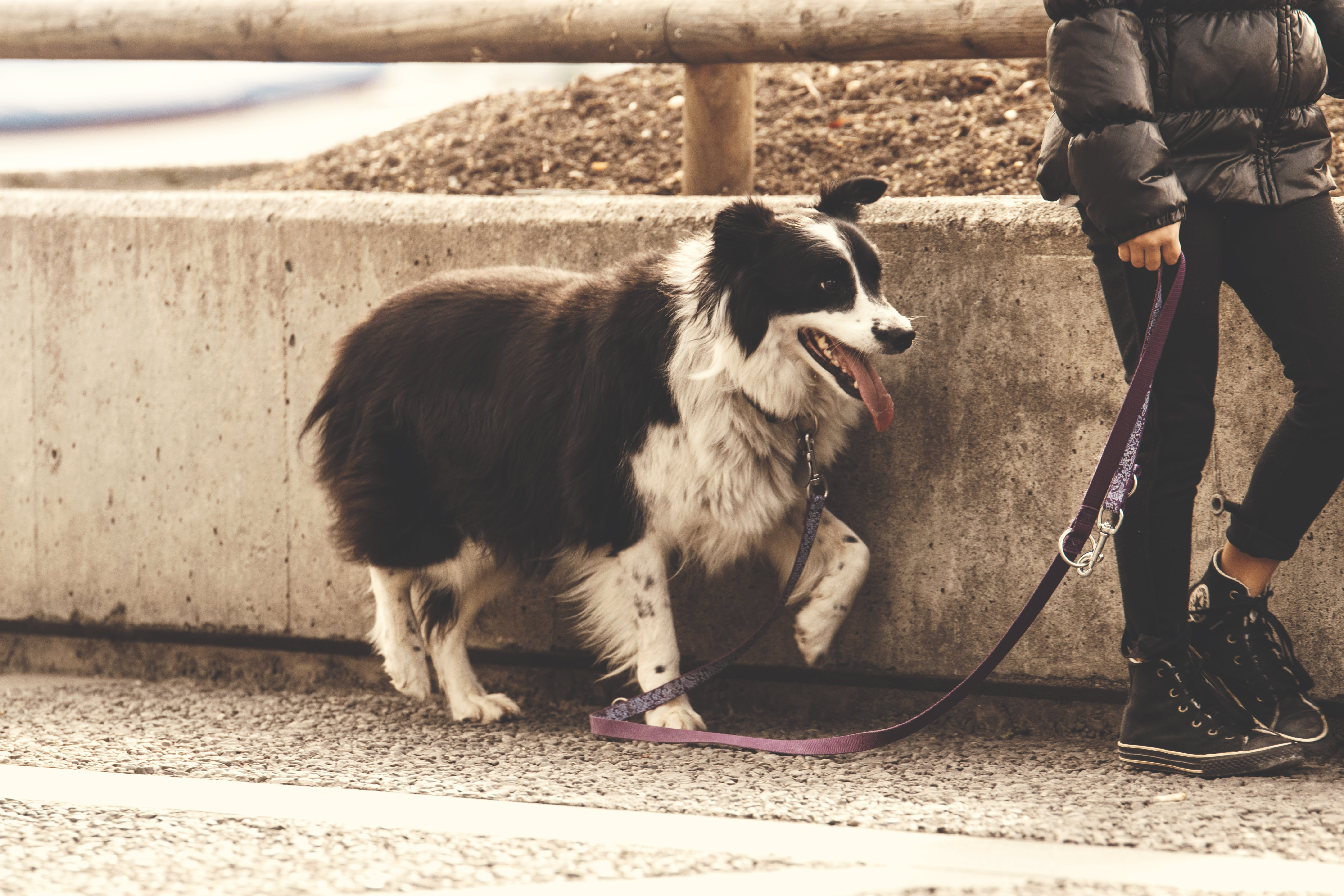 Person Holding Pet Dog Leash While Standing on Concrete Road