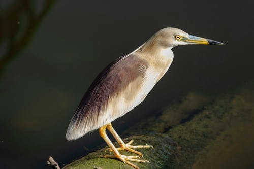 Бесплатное стоковое фото с большие глаза, озеро, птицы, с высоты птичьего полета