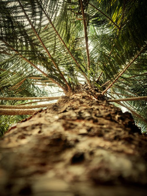 Close Up Photo of a Tree