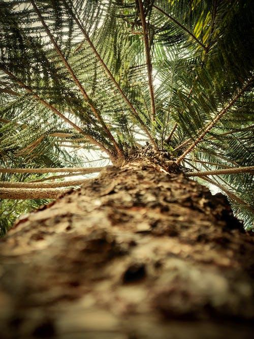 Fotobanka sbezplatnými fotkami na tému detailný záber, exteriéry, kmeň stromu, kôra