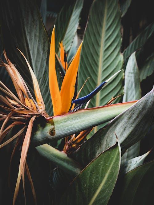 Безкоштовне стокове фото на тему «ботанічний, екзотичний, жовтий, завод»