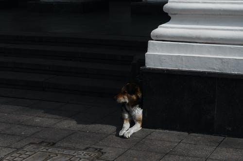 Ingyenes stockfotó állat, árnyék, épület, kutya témában