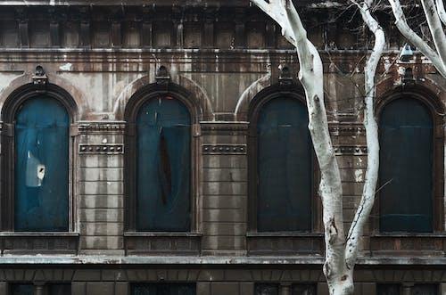 Kostenloses Stock Foto zu alt, architektur, baum, blau
