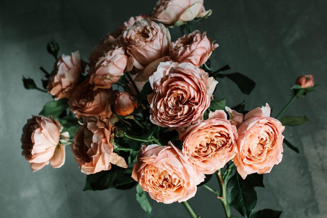 bahçe gülleri, bitki örtüsü, buket